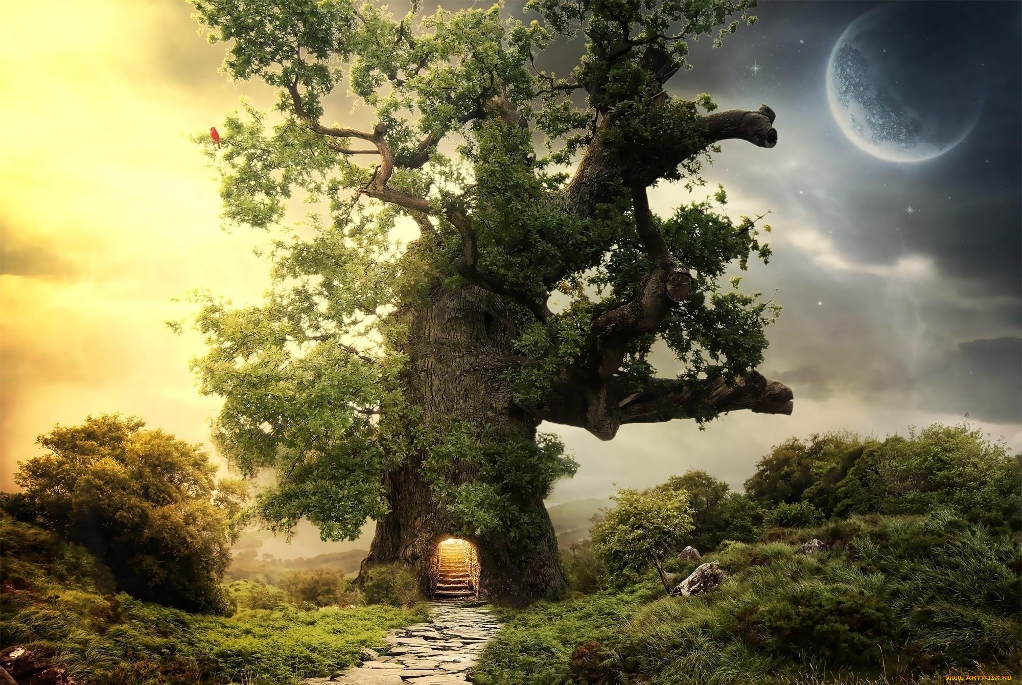 сказочные деревья фото отзывы оставляют